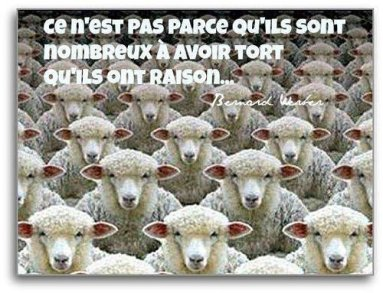moutons raison